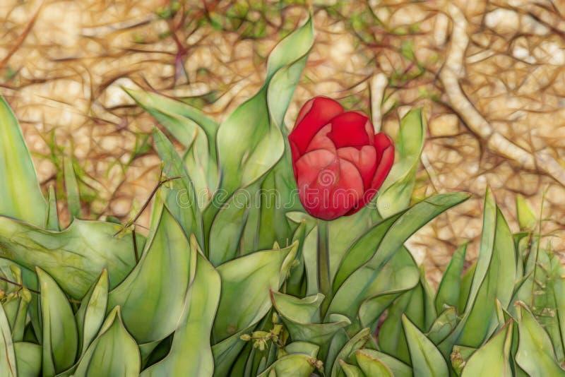 St?ng sig upp tulpan i natur royaltyfri foto