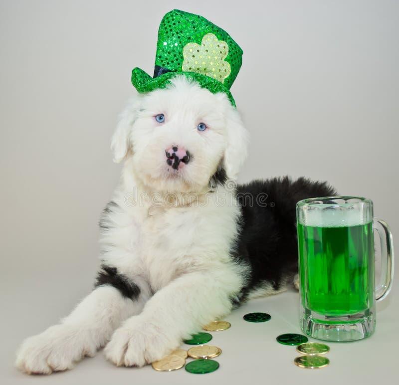 St Patrick dnia szczeniak zdjęcie royalty free