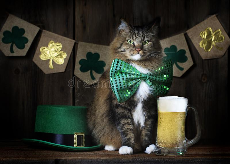 St. Patrick`s Day Cat with Beer. A cat wearing festive green St. Patrick`s Day bow tie sitting on bar top next to full beer with Leprechuan hat and clover banner royalty free stock photos
