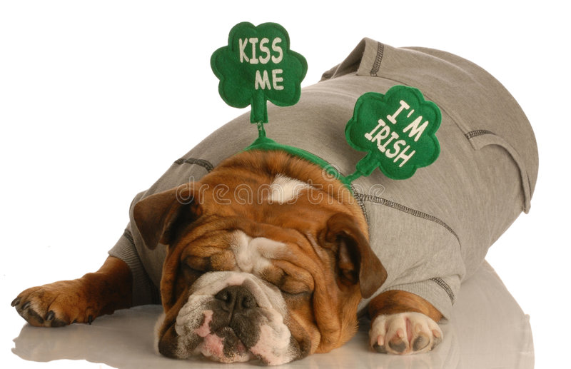 St. Patrick's Day dog royalty free stock photos