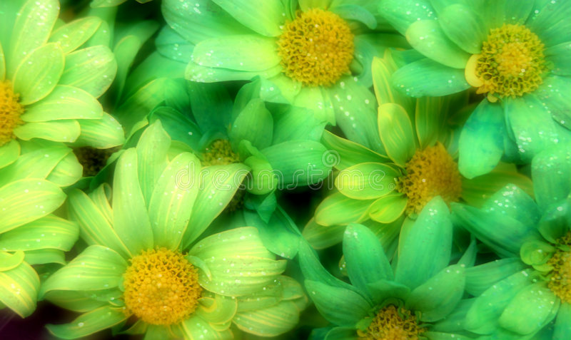 St. Patrick's Day Glitter Flowers royalty free stock image