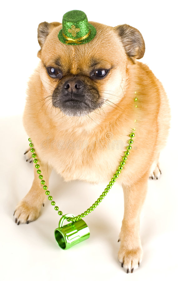 St Patrick's Day Party Pooper stock images