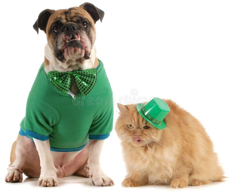 St patricks日狗和猫 图库摄影