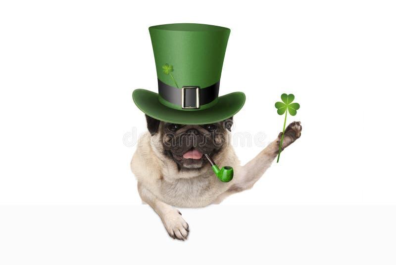 St patricks dagpug puppyhond met groene kabouterhoed en pijp, die klaverklaver steunen royalty-vrije stock fotografie