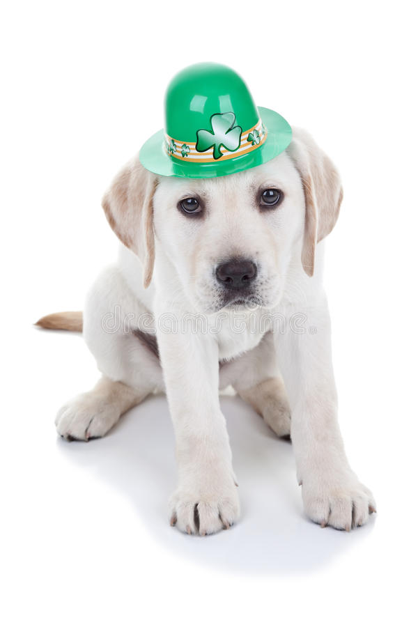 Download St Patricks Day stock image. Image of puppy, nobody, holiday - 28939341
