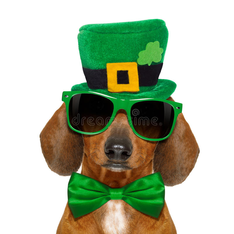St patricks day dog vector illustration