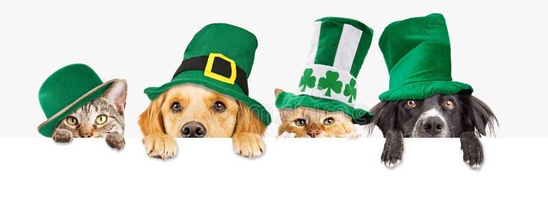 St Patricks dnia pies i kot Nad sieć sztandarem obraz royalty free