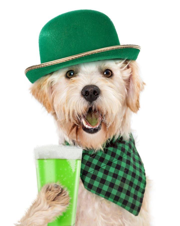 St Patricks dnia Psi Pije Zielony piwo obrazy stock