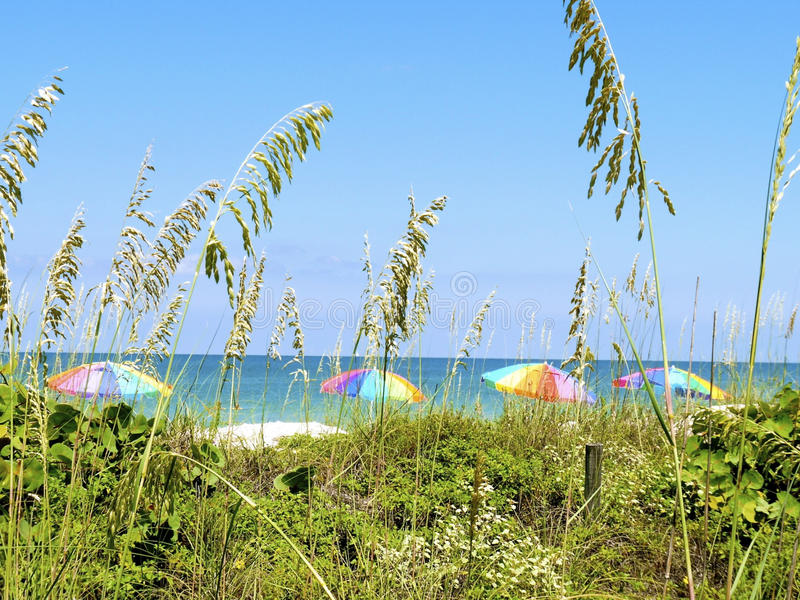 Download St. Pete Beach Umbrella View Stock Image - Image: 15591485