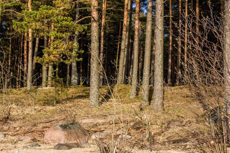st petersburg залива Финляндии стоковое изображение rf