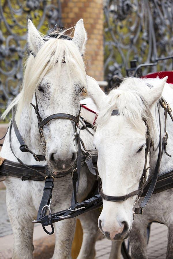 st petersburg России Команда лошади на решетке сада Mikhailovsky стоковые фото
