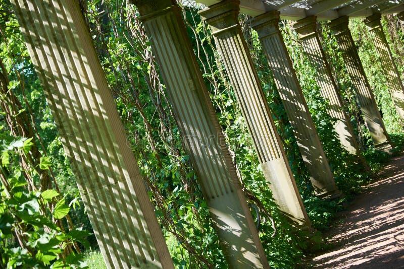 St Petersburg Catherine Park Colonnade fotografia de stock
