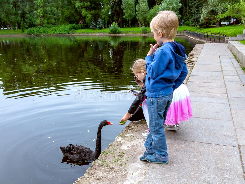 St Petersburg, Rússia - 10 de julho de 2018: Crianças em um parque da cidade que toma imagens de um smarfon da cisne preta imagem de stock royalty free