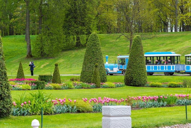St Petersburg Rosja, Czerwiec, - 3 2017 Kwiatu parterre przed ampuły kaskady fontanną zdjęcia stock