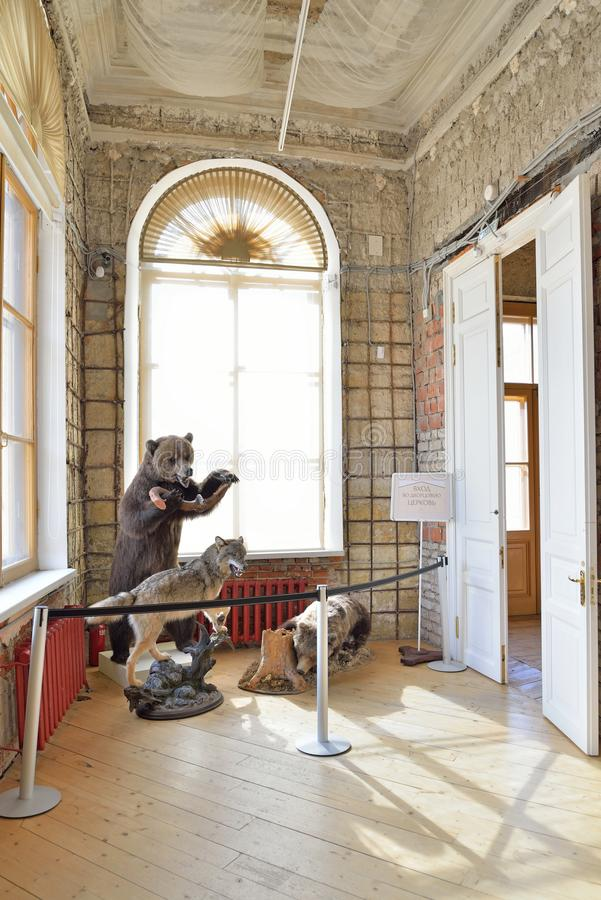 Stuffed bear and snarling wolf in the Armory hall of the Gatchina Palace royalty free stock images