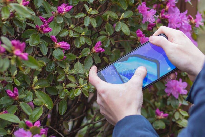 St Petersburg, RUSSLAND -02 im Mai 2019: Neue k?hle Konzepttelefon Samsungs-Falte auf dem Schirm eines Handys stockfoto