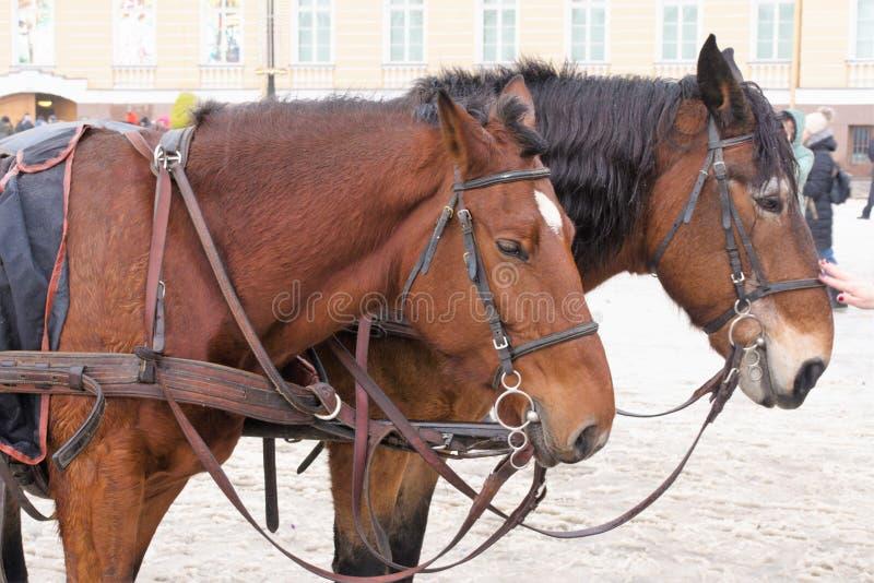 St Petersburg, Russland, am 2. Januar 2019 Zwei Pferdereittouristen auf Palast-Quadrat stockfotos