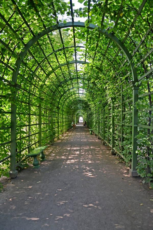 ST Petersburgo, Rusia Bosket en el jardín del verano foto de archivo