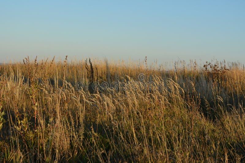 St?pp i h?st Växt- äng på solnedgången H?rligt landskap royaltyfri bild