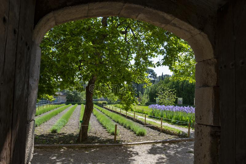 St Remy de Provence, Bouches du Rhone, Fran?a, 11 05 2019 Jarda no monastério de St Paul de Mausole fotografia de stock royalty free
