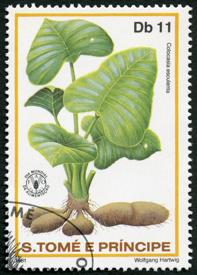 ST THOMAS Y PRÍNCIPE ISLANDS - 1981: demostraciones Colocasla esculenta, bulbos las verduras de raíz taro, día de comida de mundo imagen de archivo