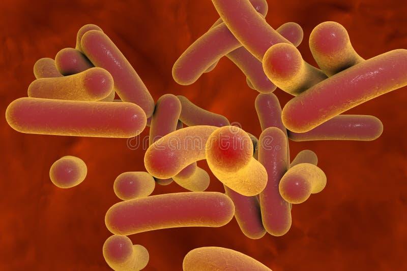 Staaf gevormde bacteriën stock afbeelding