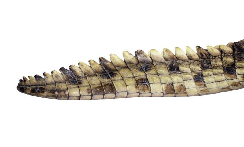 Staart van een krokodil stock foto's