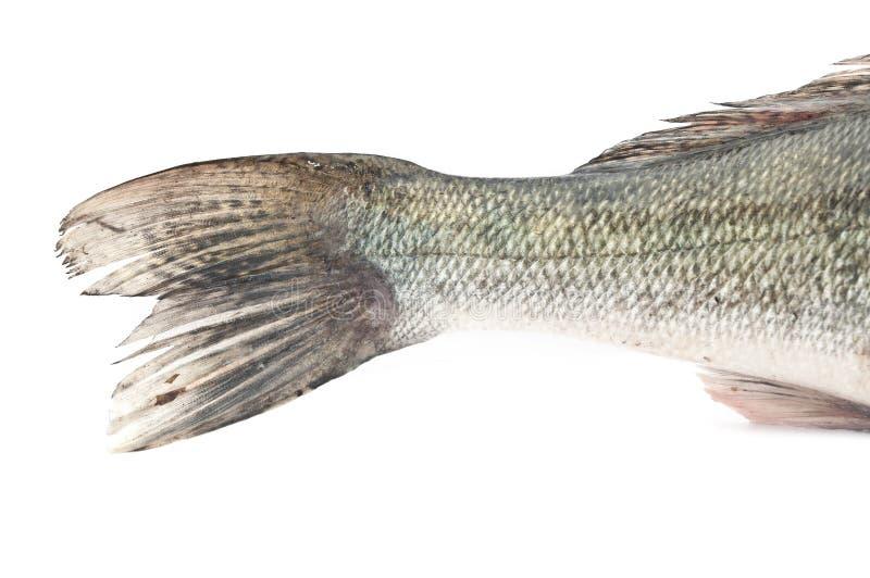 Staartvissen royalty-vrije stock afbeelding