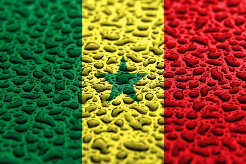 Staatsflagge von Senegal machte von den Wassertropfen Hintergrundprognosenkonzept lizenzfreie stockfotos