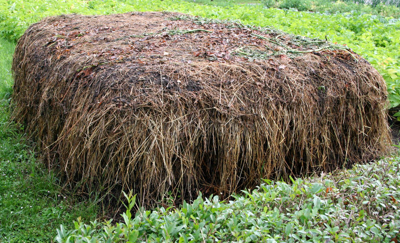 Stable manure composting stock image