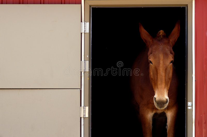 Download Stabled Horse stock image. Image of mare, domestic, thoroughbred - 158129