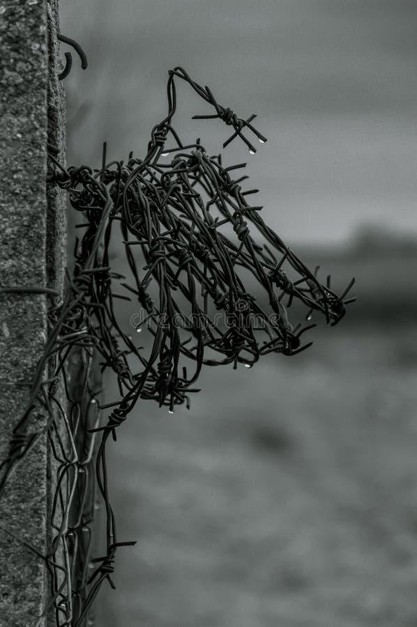 Stacheldraht in der Schwarzweiss-Farbe stockbilder