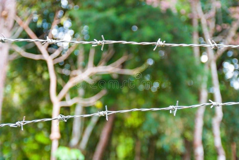 Stacheldraht in einem Wald stockfotos