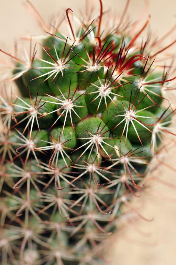 Stacheliger Kaktusnahaufnahmeschuß stockbilder