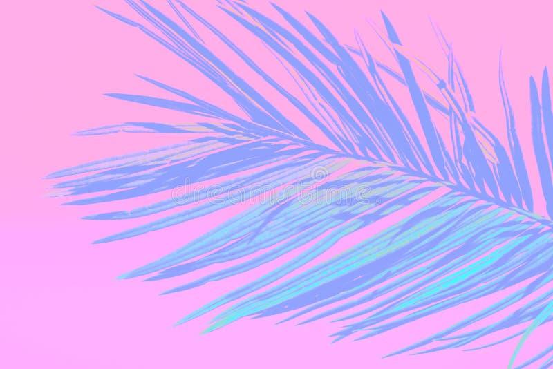 Stacheliges gefiedertes Palmblatt getont in der Knickente auf hellrosa Hintergrund der Steigung Modische Neonfarben Unbedeutende  lizenzfreie stockfotos