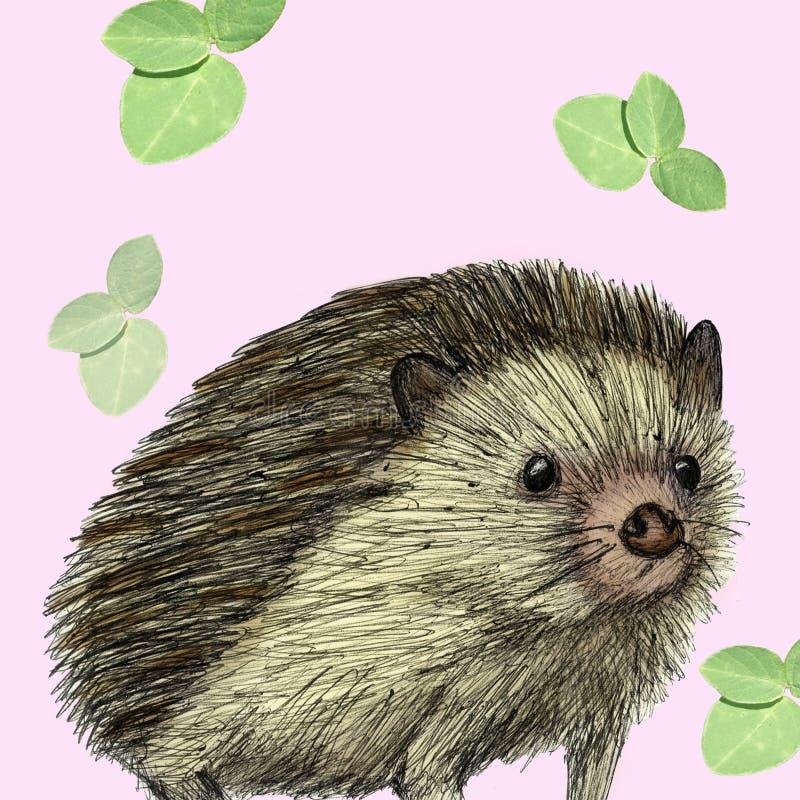 Stachelschweinillustration gezeichnet mit Stift und digitaler Farbe lizenzfreie abbildung