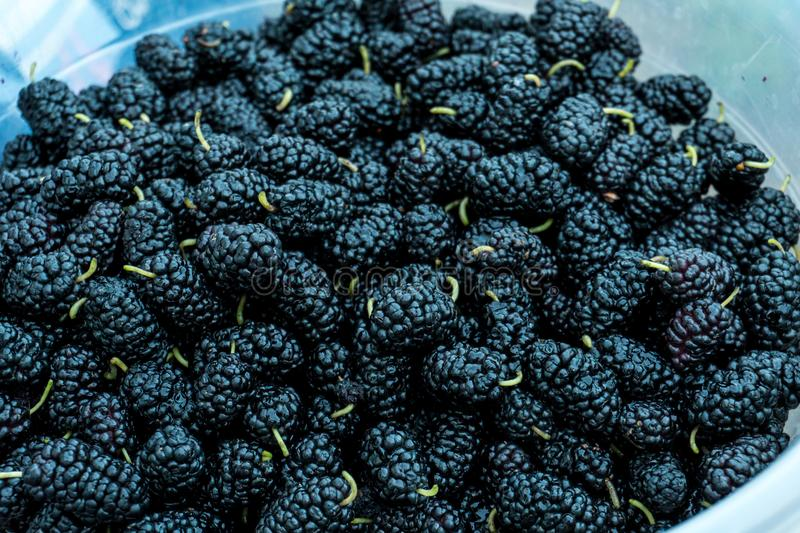 Stack of black Mulberry berry. Close up shot royalty free stock images