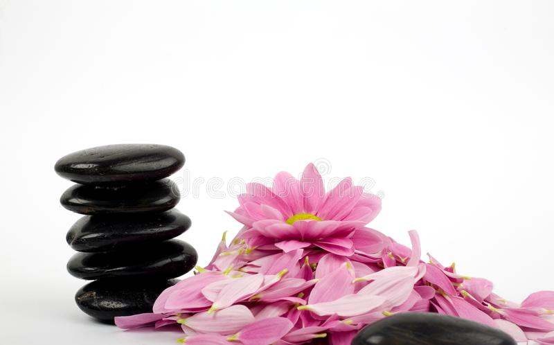 Stack of black stones and flower royalty free stock image