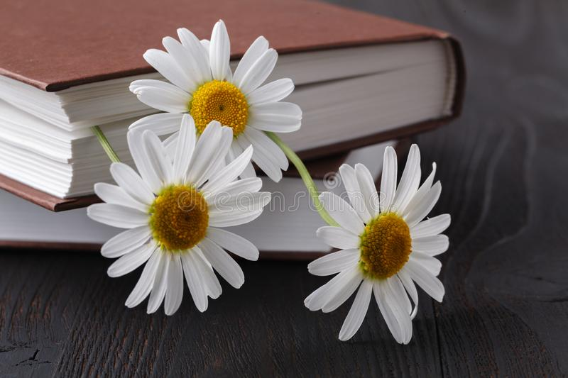 Stack of books with small bunch of daisies stock image