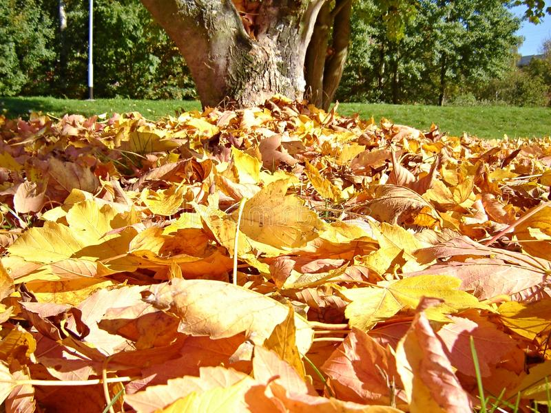 Stack of dry leaves under the tree royalty free stock photography