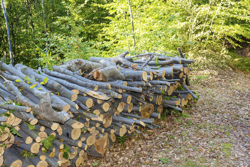 Stack of firewood in the forest royalty free stock images