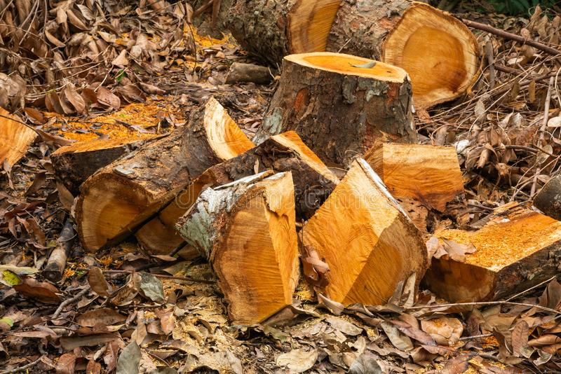 Stack of firewood and wood log. stock photos