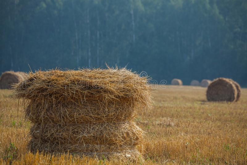 The stack in front with blurred background on the field after harvest. stock images