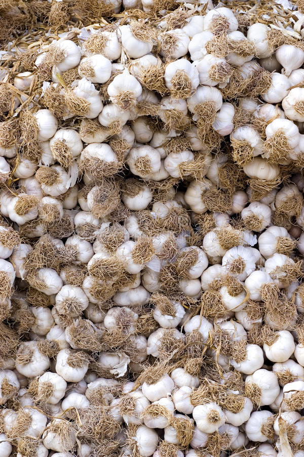 Stack of Garlic at the market royalty free stock photos
