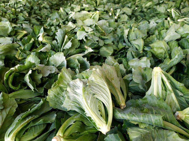 Stack of green brussels sprout stock images