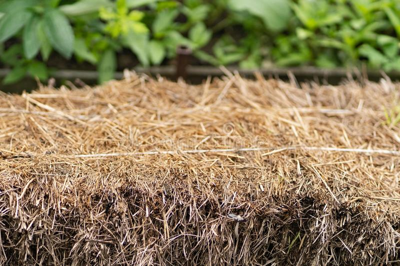 Stack of hay in the garden close up royalty free stock photography