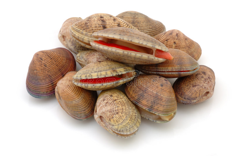 Stack of live clams stock images