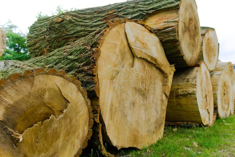 A stack of logs cut down in the city royalty free stock photo