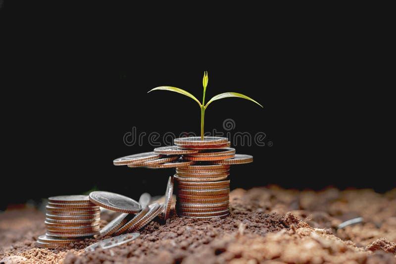 Stack-Münzen mit Pflanzen, die in Stufen wachsen und schwarzen Hintergrund. Geldsparende Ideen lizenzfreie stockfotos