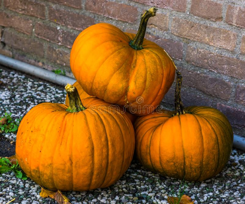 Stack of orange pumpkins, traditional halloween and autumn decorations, seasonal background stock photo
